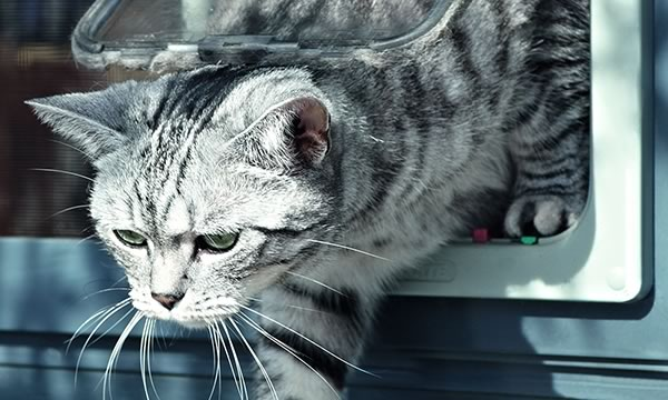 ifasol Insektenschutz Katzenklappe